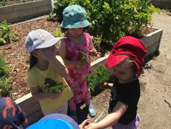 Caring for our Community Garden 3