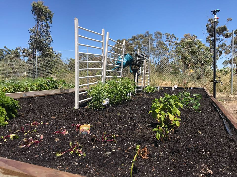 Caring for our Community Garden 4